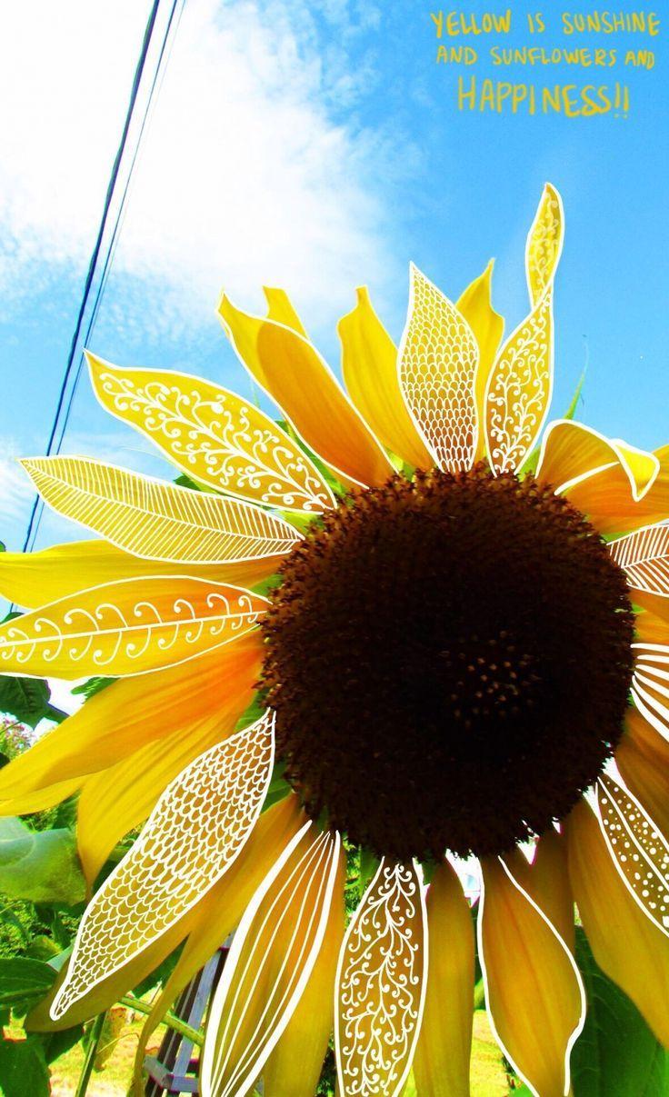 Pin By Karys On Vsco Sunflower Wallpaper Yellow