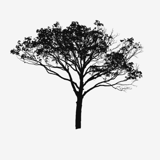 Tree Vector Black And White Tree Vector Clipart Tree Clipart Tree Png Vector Png Transparent Clipart Image And Psd File For Free Download Black And White Tree Tree Images White Tree