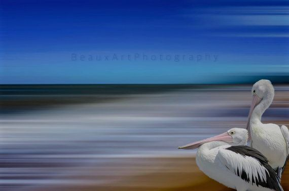 A stylised photography technique depicting an 2 resting pelicans looking out to sea. I live by the ocean and find that this influences the majority of my work. All photos are printed on professional photographic gloss finish paper. Watermark will not be on final print. Print does not come with border, frame or mount. Please feel free to contact me if you have any questions. To view more of my images please visit my website...traceyjonesstudio.com