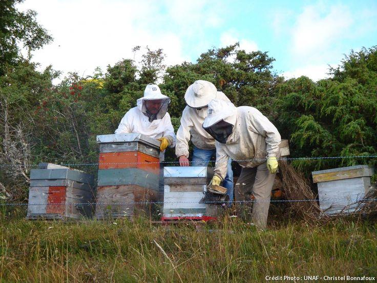 Pas de vacances pour l'apiculteur, qui en août, a fort à faire: c'est en effet le mois tant attendu de la récolte du miel ! Récapitulatif des actions à mener jusqu'au jour J, de la ruche au jardin.