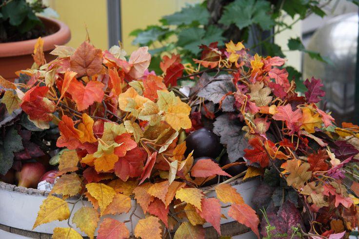 Le infinite sfumature di colore delle foglie d'autunno