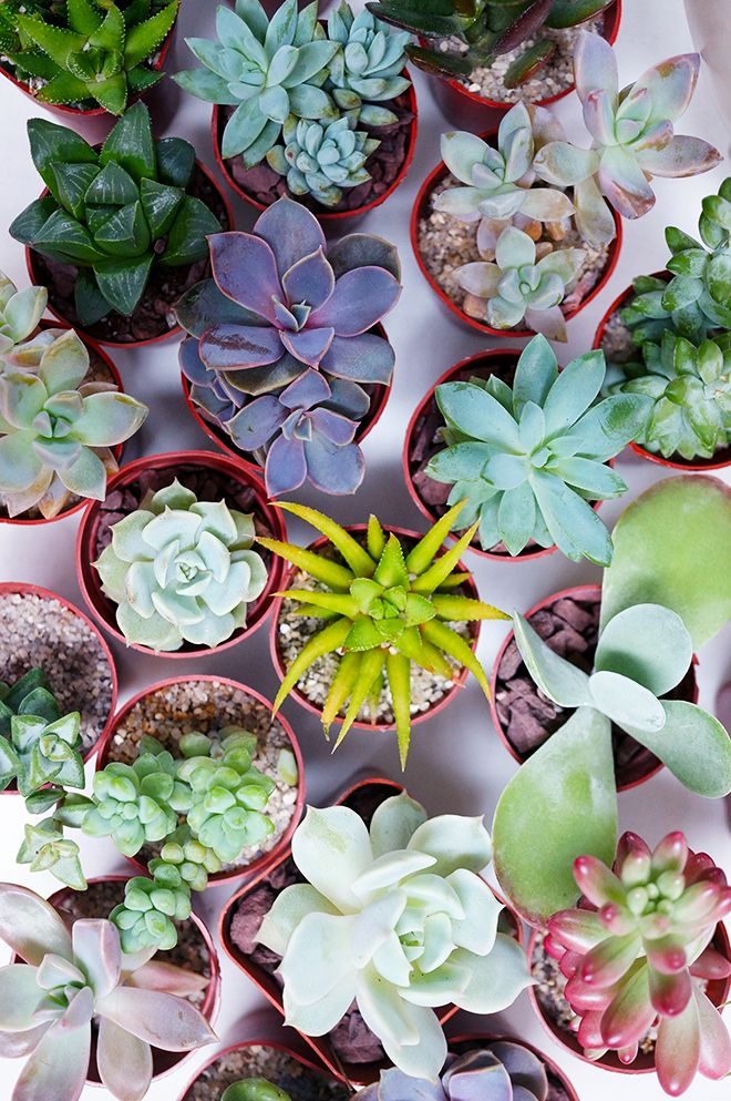 How to make a Succulent Garden DIY - QuinnCooperStyle.com