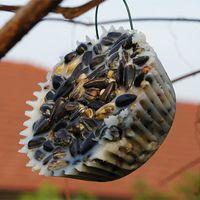 Vogel-Futter in Muffin-Form...