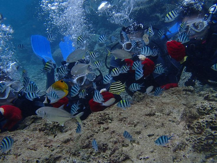 沖縄の海最高~!と絶叫。。。 - http://www.natural-blue.net/blog/info_4407.html