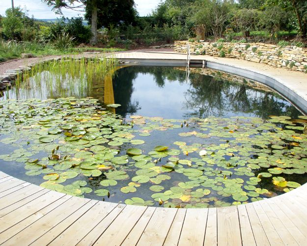 329 best images about natural pools and ponds on pinterest for Koi pond natural swimming pool