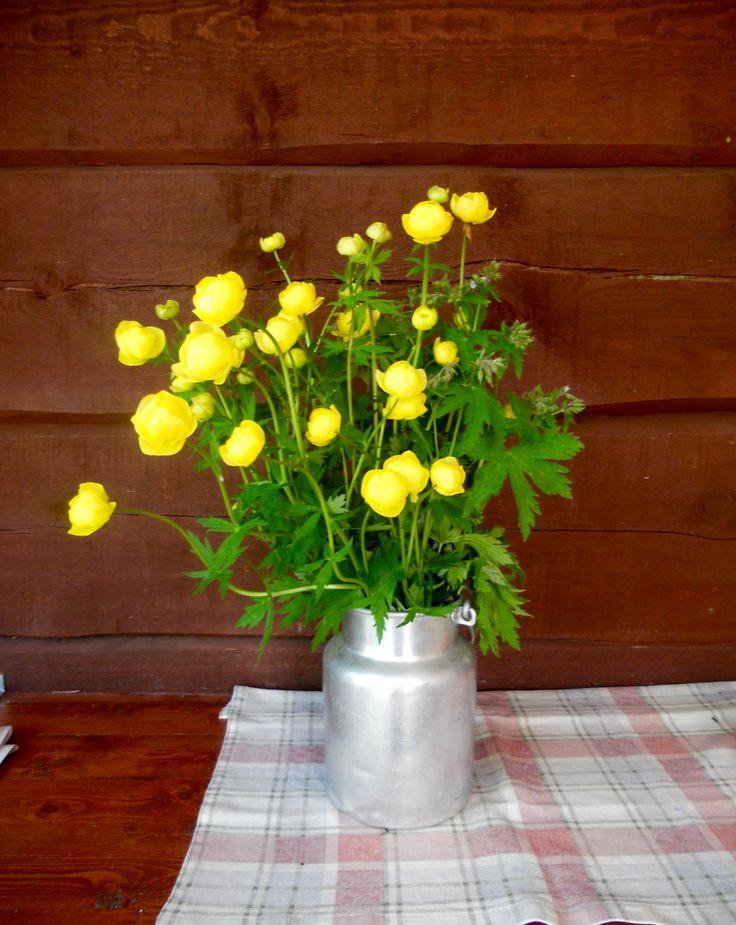 Juhannuskukka Kullero -  Midsummer flowers Globeflower