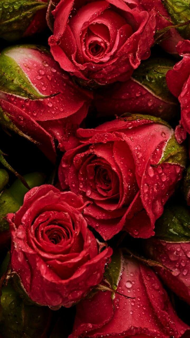 здесь картинки на телефон розы или что нибудь сюжету