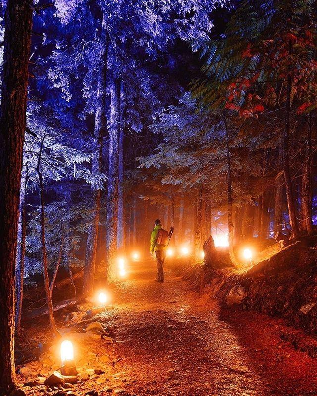 84b64b7e91fea169adf4b89f7365150f - Forest Of Light Descanso Gardens December 15