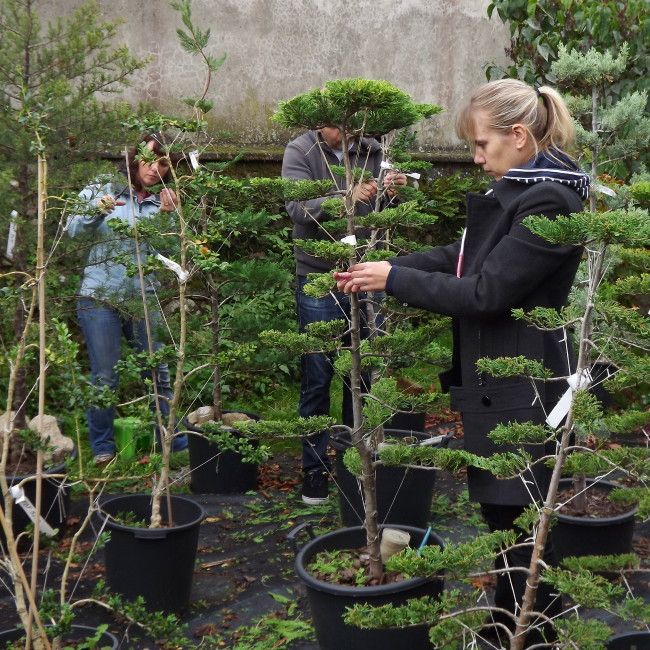Les 25 meilleures id es de la cat gorie arbuste japonais sur pinterest floraison des arbres - Arbuste japonais fleur jaune ...