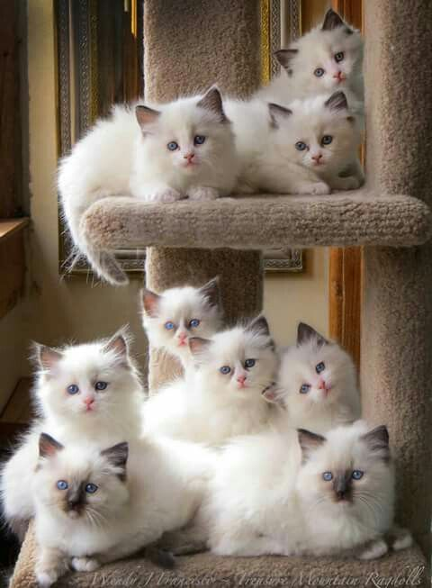 Gatos hermosos ♥