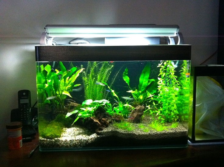 15 best images about fish tank ideas on pinterest black for Fish tank background ideas