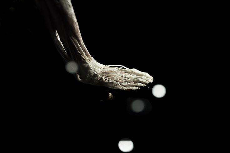 Picture by Sam Loman, #BWArtistDay at www.bodyworlds.nl/artistday  Sam: Ik ben altijd gefascineerd door details, vorm en licht & heb dat als uitgangspunt genomen. Meestal kijken mensen in zijn geheel naar een lichaam, maar bijvoorbeeld het vlechtwerk van de pezen van de extensoren van de voet zijn de moeite waard om op te merken Of de verschillende vormen van spieren die perfect in elkaar gevlochten zijn.. ' Met recht 'The Art of Anatomy'
