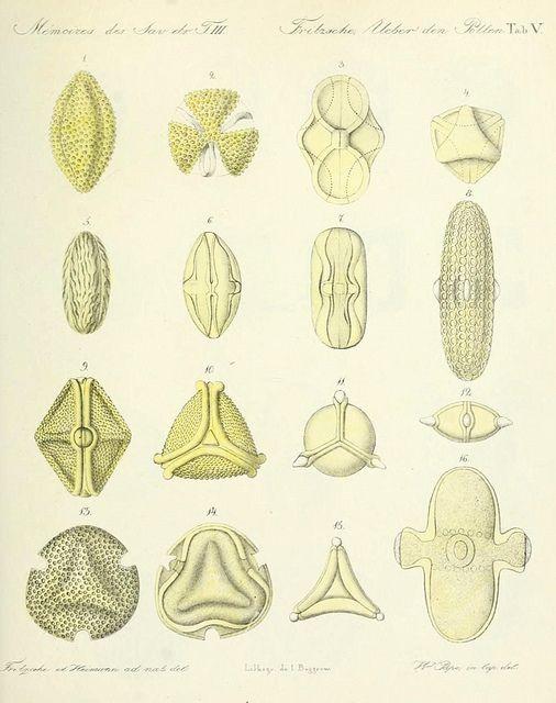 Pollen - Public Domain Review,