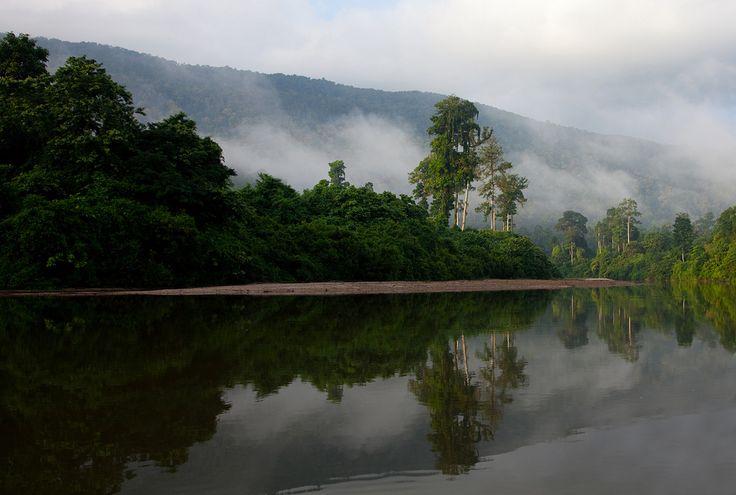 108 Morning mist on hills--Endau Rompin , Johor , Malaysia