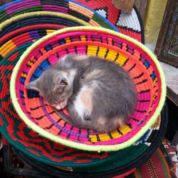 petit chat d'Essaouira