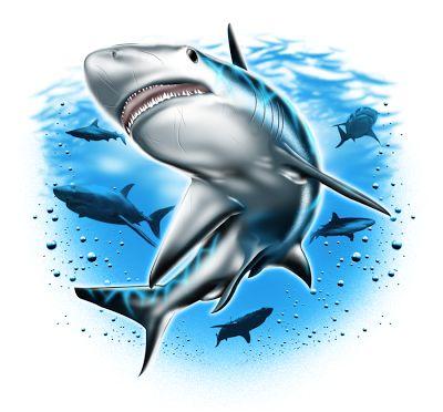 GRIFFE TATTOO: tubarão desenhos e fotos para tattoo