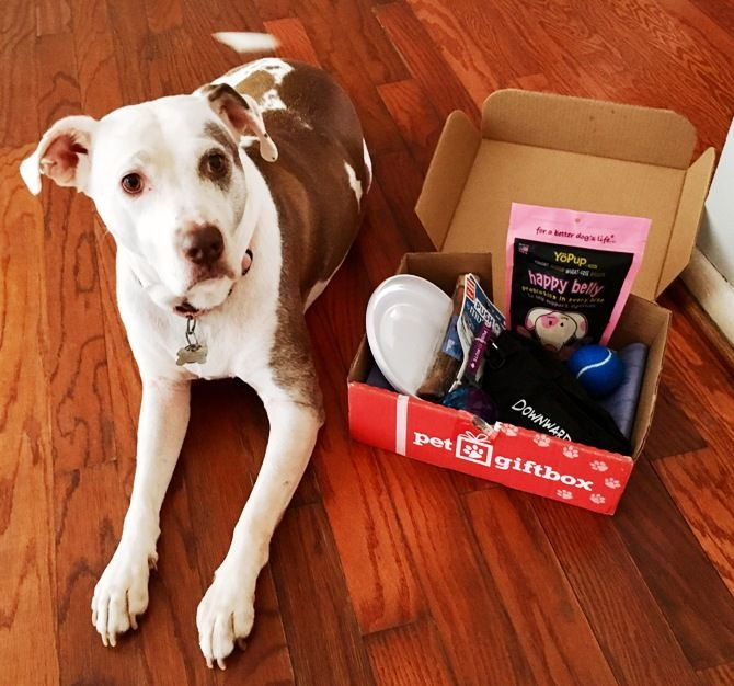 ENTER TO WIN GIVEAWAY + Pet Gift Box Review + $5 Off Coupon Surprise your pet monthly with tail wagging goodness. The Pet Gift Box delivers a monthly themed box of chews, toys, treats, and accessories.   #petgiftbox #forcats #fordogs #giveaway #pets #reviews #specialoffers #subbox #subscriptionbox #box #delivered #dog #furbabies #animallover #doglover #dogbox #boxforpets #forpets #petgifts #monthlybox #entertowin #largedog #petsurprise #puppytreats