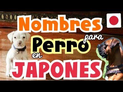 Nombres italianos para perros - YouTube
