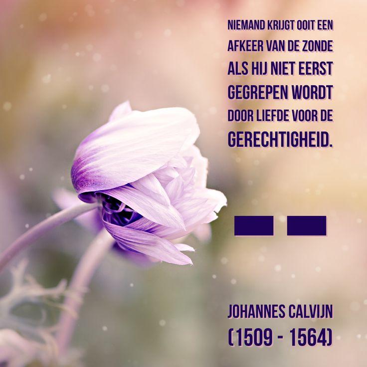 Gegrepen door de liefde -  Johannes Calvijn (1509 - 1564)