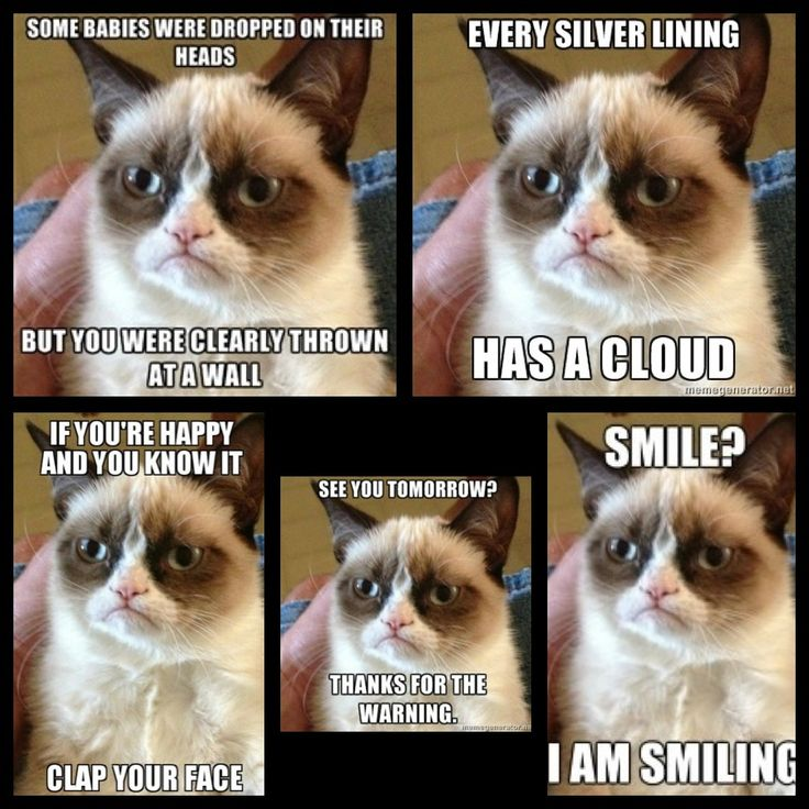 Charming Grumpy Cat Funny Sayings