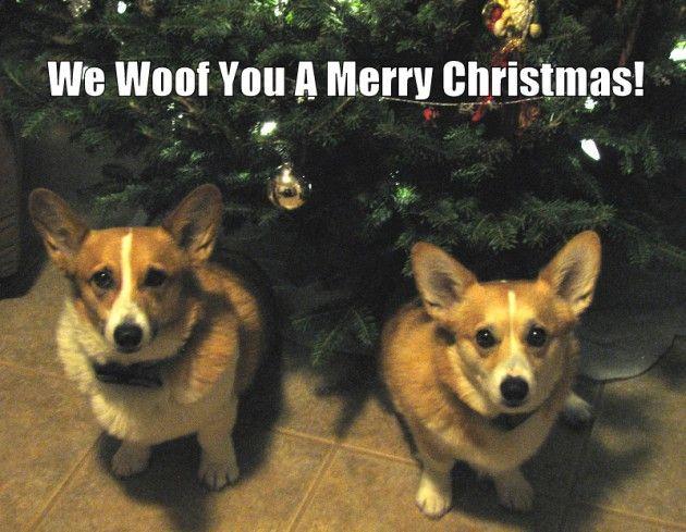 We Woof You A Corgi Christmas Cards