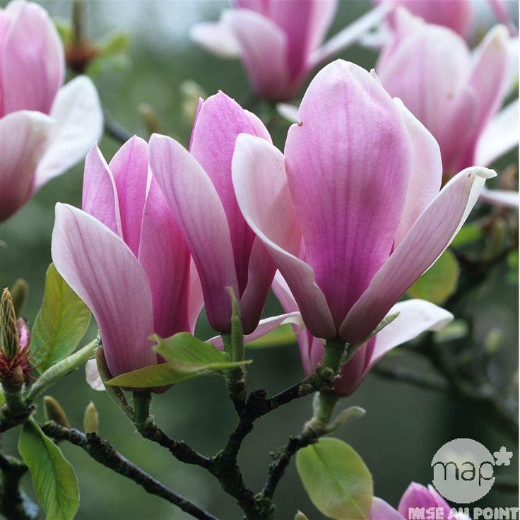 337 best magnolia images on pinterest magnolias. Black Bedroom Furniture Sets. Home Design Ideas
