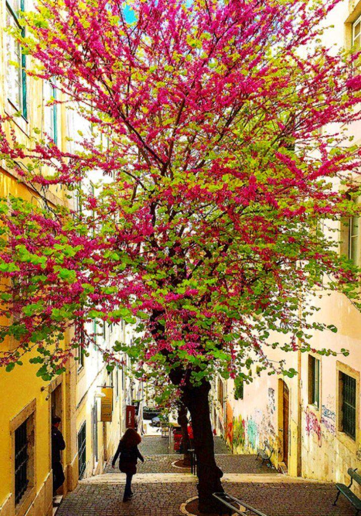Graça. Lisboa. Foto publicada pelo Diário de Lisboa.
