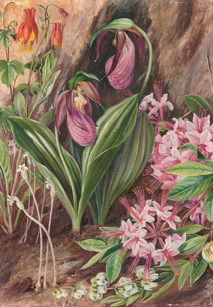 Wild Flowers From The Neighbourhood Of New York. Prints By Marianne North |  Magnolia Box | Marianne North | Pinterest | Marianne North, Prints And  Botanicu2026