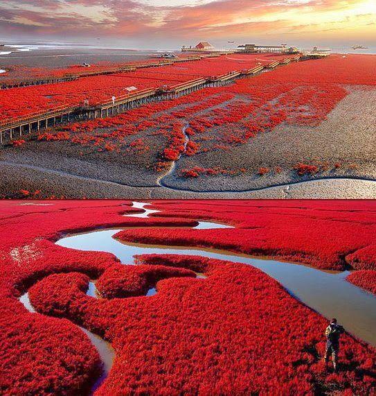 Panjin Red Beach, China: Beaches, Nature, Red Beach, Redbeach, Beautiful Places, Travel, Photo, China