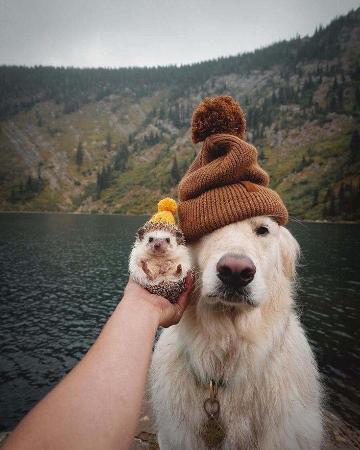 Os melhores amigos   – Schöne Bilder