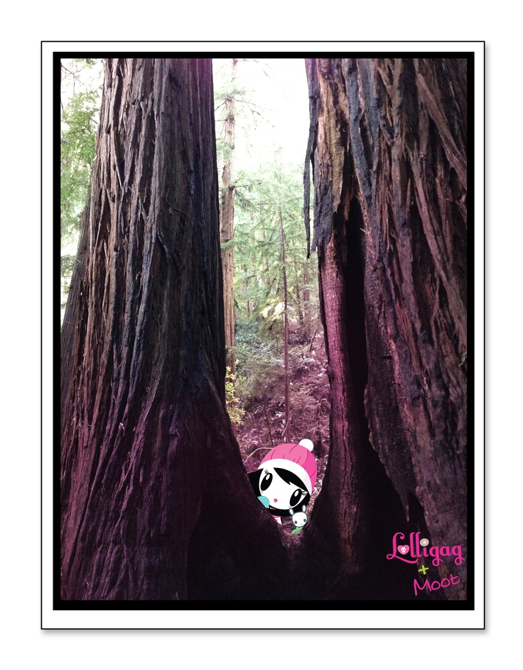 Lolligag (and Moot!) in Muir Woods