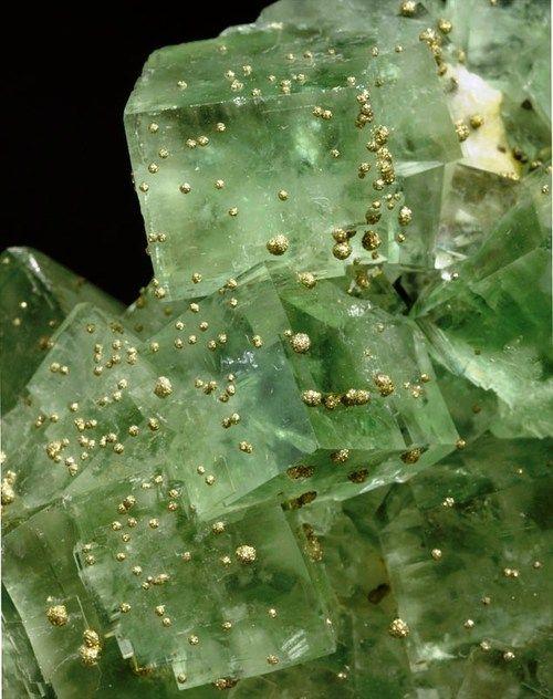 Forex quartz