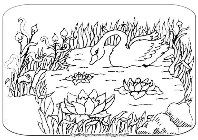 Gambar Mewarnai - Mewarnai Gambar Bebek Angsa.   Gambar di atas adalah gambar mewarnai bebek ang...