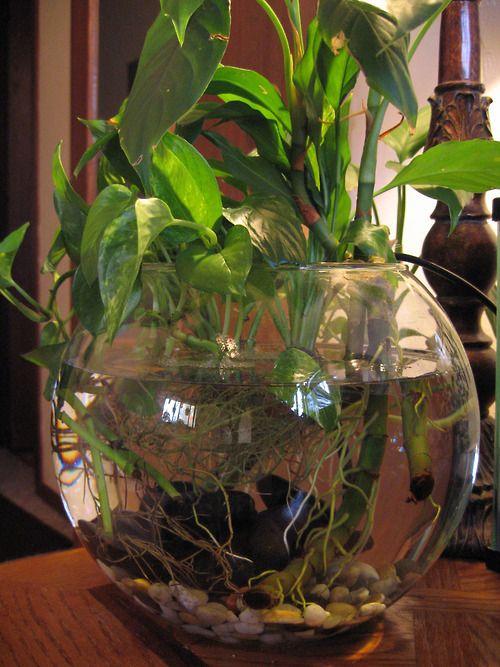 Http Plantdiaries007 Blogspot Com 2011 07 Betta Fish Bowl Html Garden Water Plants Ideas