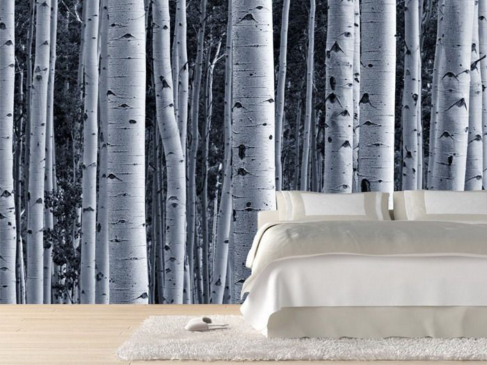 Aspen birch forest wall mural birch tree wall mural for Brewster birch wall mural