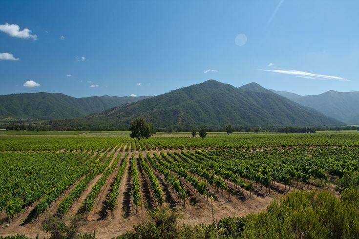 ¡Llegaron los vinos chilenos!
