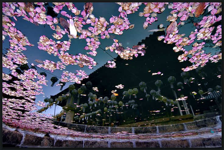 :: Reflection - Tongdo Temple - Eounyang, Korea | Nikon D2x + 12-24mm ::