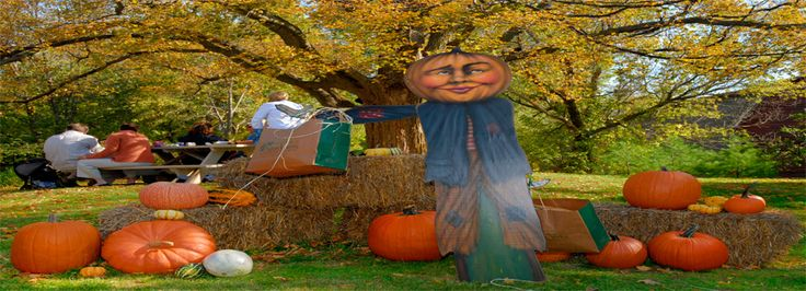 Pumpkin patch festival egg harbor