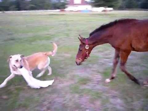 pup n horsey love!
