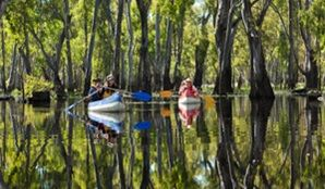 Edward River canoe and kayak trail, Murray Valley National Park. Photo: David Finnegan.