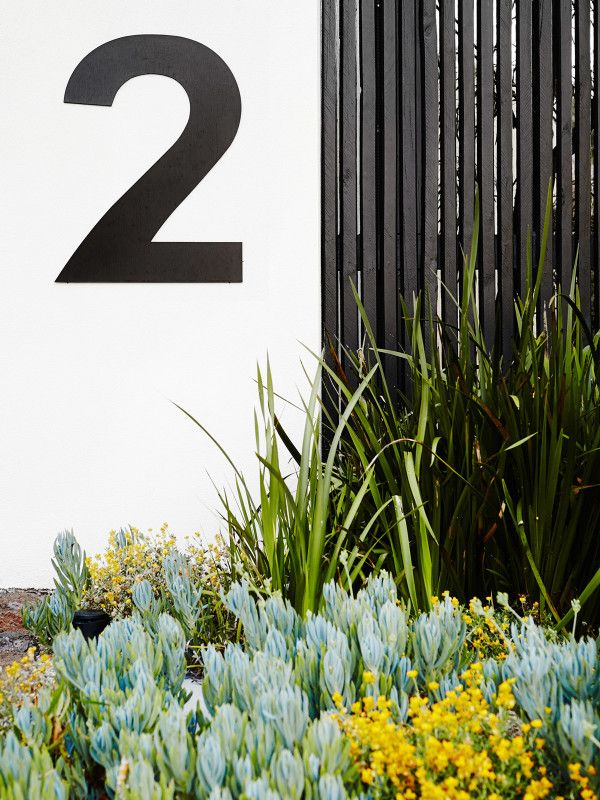 Simple and strong! The bold black and white colour scheme of the property entry is softened by a mixed planting of native and exotic plants such as blue chalksticks (Senecio serpens) and yellow buttons (Chrysocephalum apiculatum). Photo – Annette O'Brien for The Design Files.