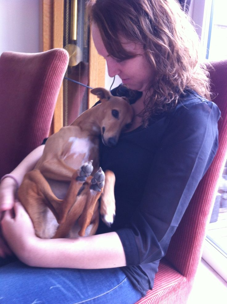 ~ Adorable Italian Greyhound Lily Snuggle ~♥~