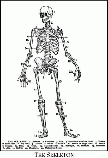 Vintage Halloween Skeleton Diagram Drawing