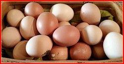 Fresh Eggs From My Backyard Chicken!