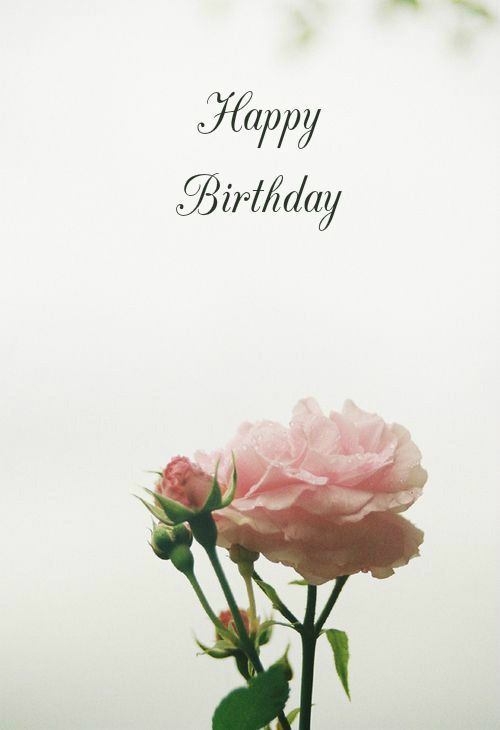 Pretty Rose Happy Birthday Quote birthday happy birthday happy birthday wishes birthday quotes happy birthday quotes birthday quote happy birthday quotes for friends