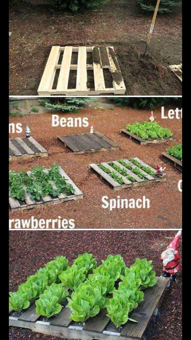 Vegetable garden plans for beginners ayanahouse - 71 Best 3500 Environmental Gardening Tips And Tricks Images On Pinterest Gardening Veggie Gardens And Vegetable Garden