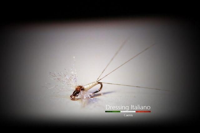 Dressing Italiano: Costruzione mosche secche: CAENIS by Dressing Ital...