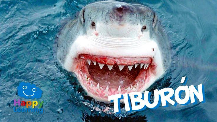 El Tiburón   Videos Educativos para Niños