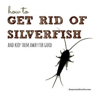 How to get rid of silverfish from HousewifeHowTos.com