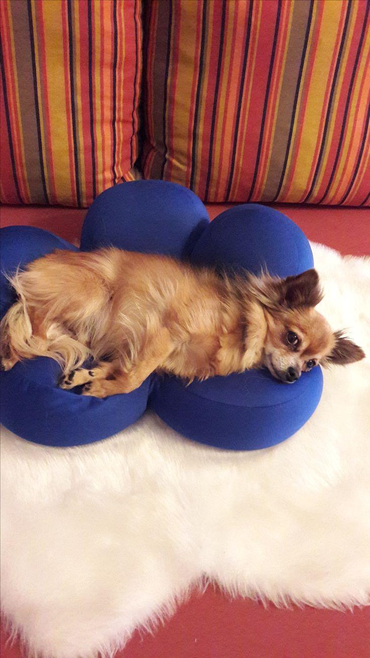 Hunde Foto: Trudi und Charly - Mis büebli am relaxen.... Hier Dein Bild hochladen: http://ichliebehunde.com/hund-des-tages  #hund #hunde #hundebild #hundebilder #dog #dogs #dogfun  #dogpic #dogpictures